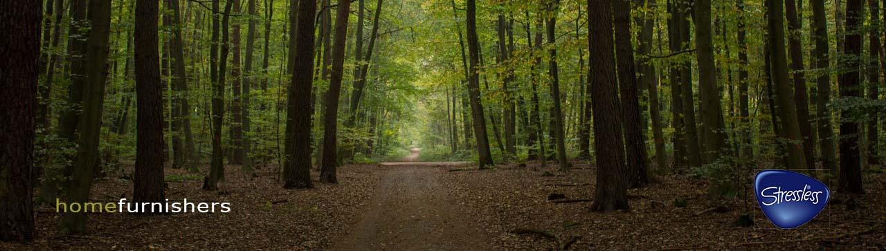Beech wood forest