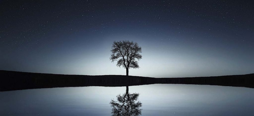 Solitary tree at night