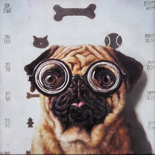 Canine Eye Exam Propac Image