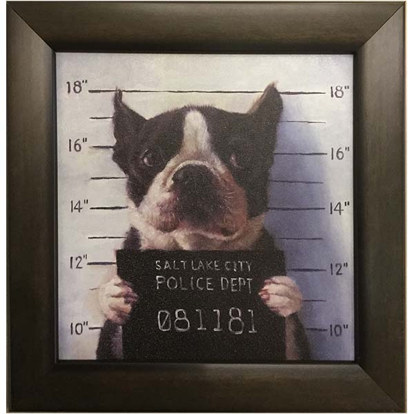 Boston Terrier Mug Shot