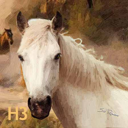 arabian horse white