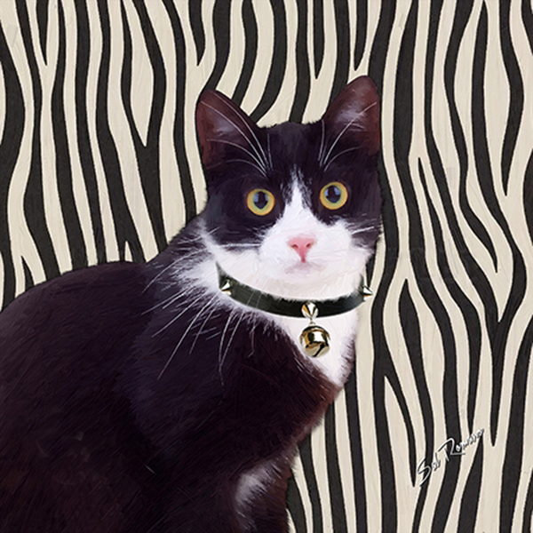 black and white tux cat