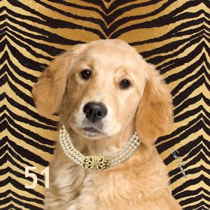 Golden Retriever Pearl Collar