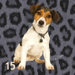 Jack Russell Tri-color
