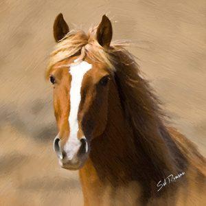 quarter horse poppa-artzee