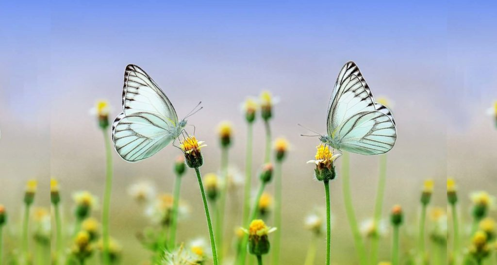 spring is near, the flowers boom and butterflies will come